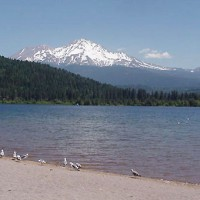 Lake Siskiyou and seagulls, Mt. Shasta, California