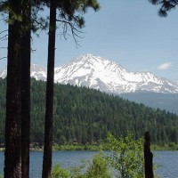 Lake Siskiyou and Mount Shasta, seen through the trees
