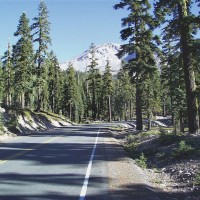 Forested slopes on Everitt Memorial Highway, Mount Shasta